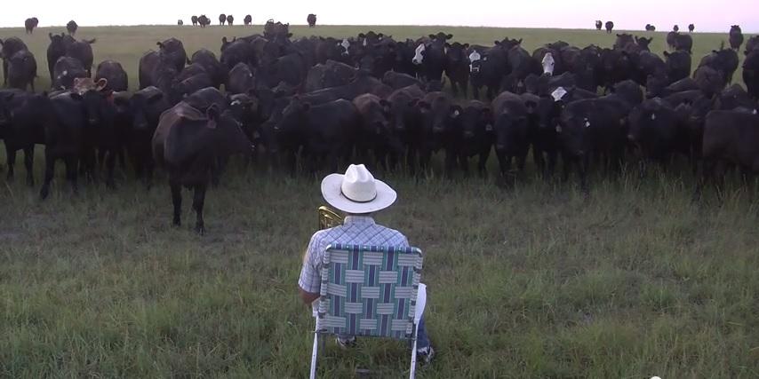 cowserenade
