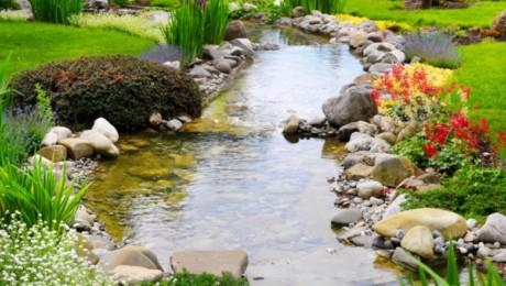 Deep Cypress Garden
