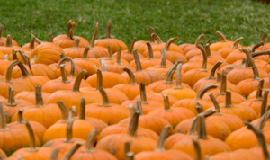 Oilpatch Pumpkin Patch