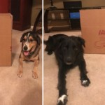 Moving with your pets